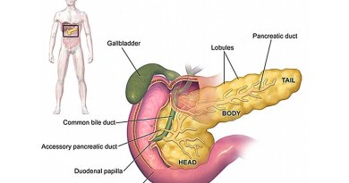 Anatomy of pancreas. Source: Wikipedia Commons.