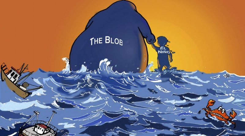 'The Blob' and El Niño are on their way out, leaving a disrupted marine ecosystem behind. Credit Michael Jacox