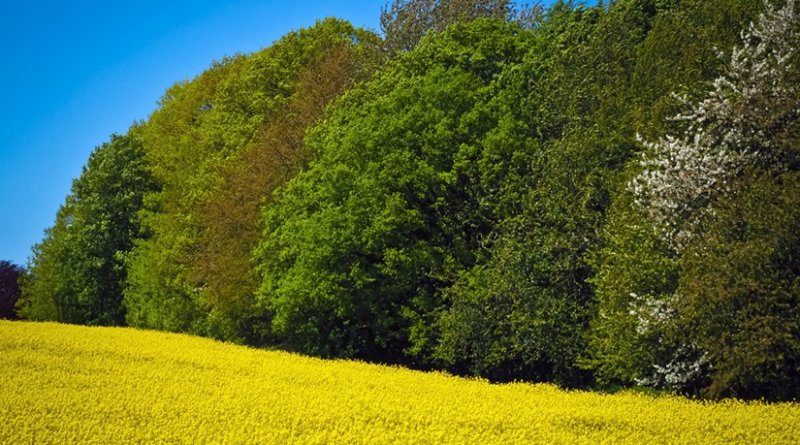 Adding trees to agricultural landscapes benefits crops and the environment