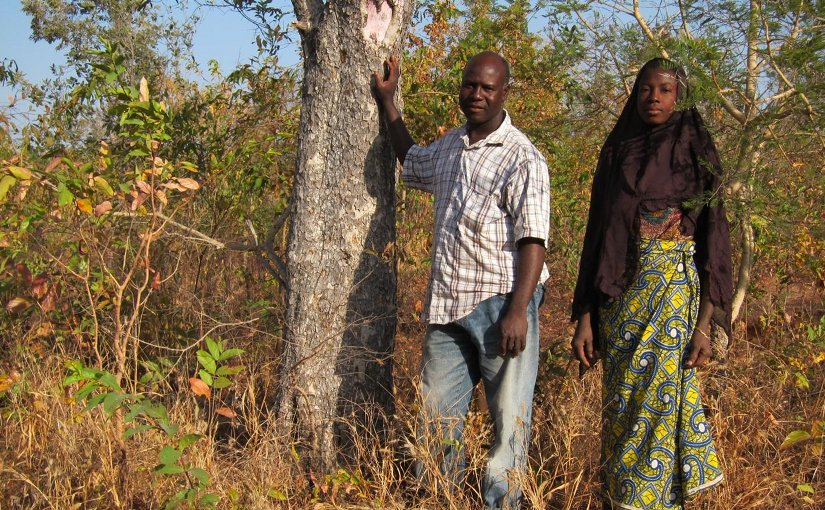 Farms near forests tend to have more trees, which provide income and other benefits for local people, such as these farmers in the buffer zone of W National Park, Benin. Credit Daniel Miller