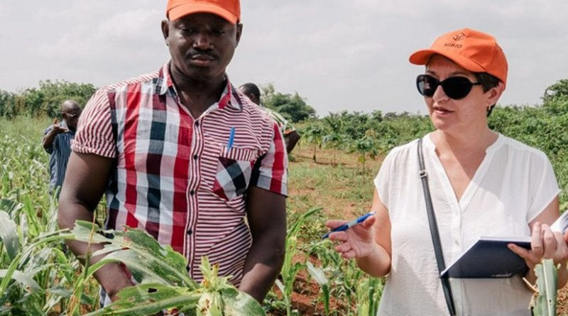 Researcher Ghislain Tepa-Yotto (UNA) and senior research specialist May-Guri Sæthre (NIBIO) inspect the damage on maize plants caused by fall armyworm larvae. The crop has been totally destroyed. Photo: Ragnar Våga Pedersen.