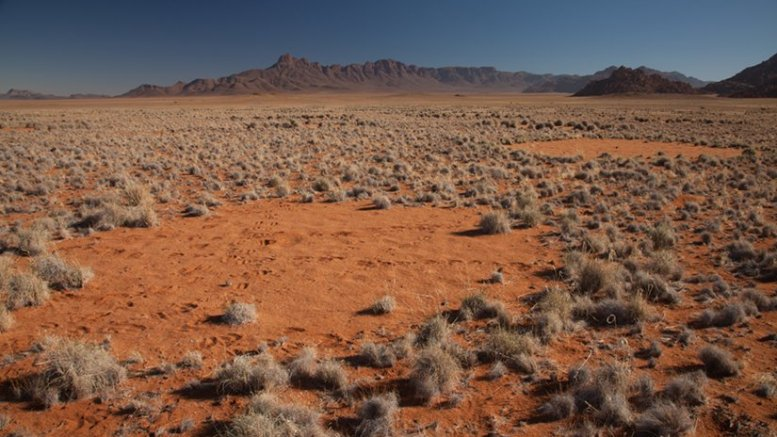 The fairy circles of the Namib Desert. Photo by Tyler Coverdale, Princeton University; and Jen Guyton, Princeton University