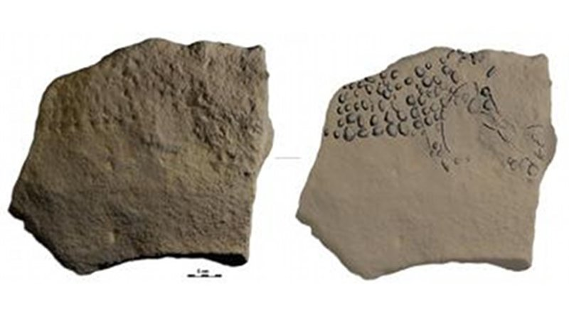 Newly discovered limestone slab from Abri Cellier with pointillist mammoth in profile view formed my dozens of individual punctuations and re-shaping of the natural edge of the block to conform to the animals head and back line. Credit Photo and drawing by R. Bourrillon.