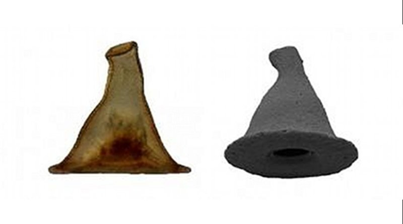 Researchers identify a microorganism with a carapace that resembles the wizard's hat worn by Gandalf. Credit images: Jordana C. Féres & Alfredo L. Porfírio Sousa