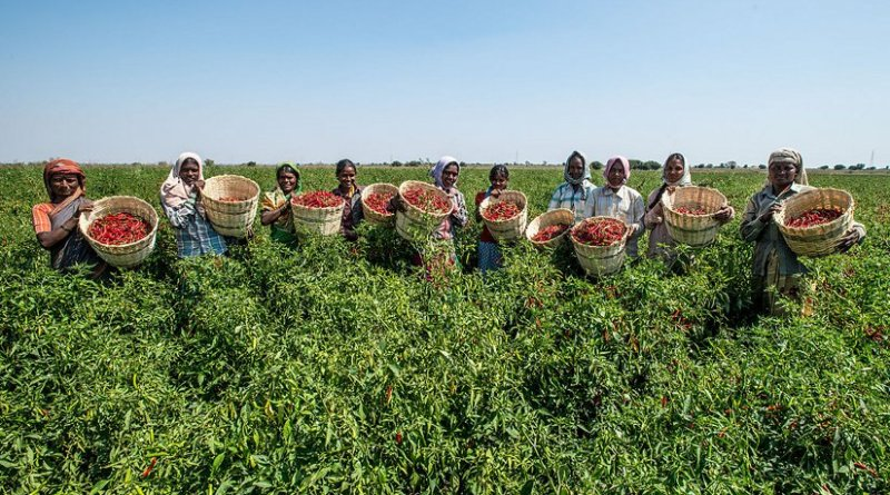 Farming horticulture in Karnataka, India. Photo by Asian Development Bank, Wikipedia Commons.