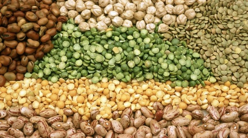 Compared to individuals with a lower consumption of total legumes -- lentils, chickpeas, beans and peas -- individuals with a higher consumption had a 35 percent lower risk of developing type 2 diabetes. Credit CSIRO