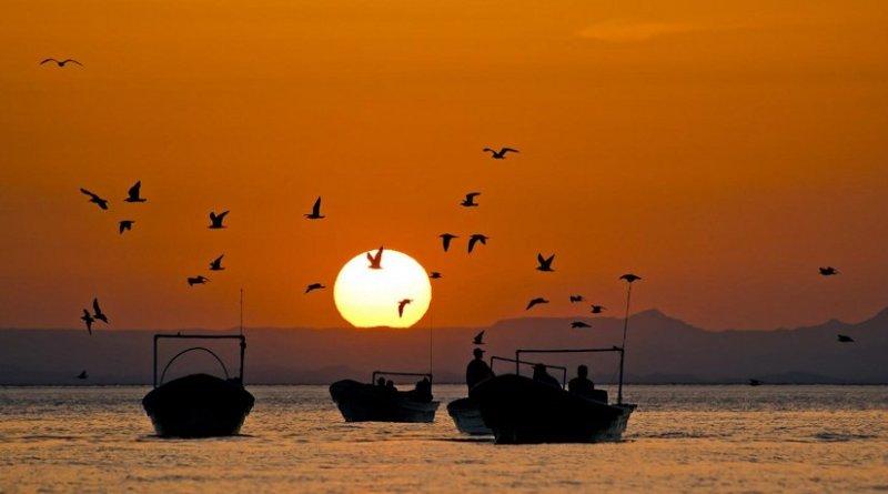 These are Fishing pangas in the Gulf of California. Credit Octavio Aburto-Oropeza