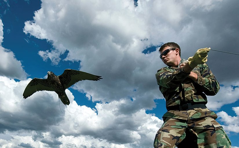 Cadet-in-charge for Academy falconry team pulls lure as Ace, a black gyr-saker falcon, makes pass at it, September 10, 2010 (U.S. Air Force/Bennie J. Davis III)