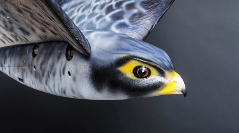 Robird Grey. Photo Credit: Clear Flight Solutions