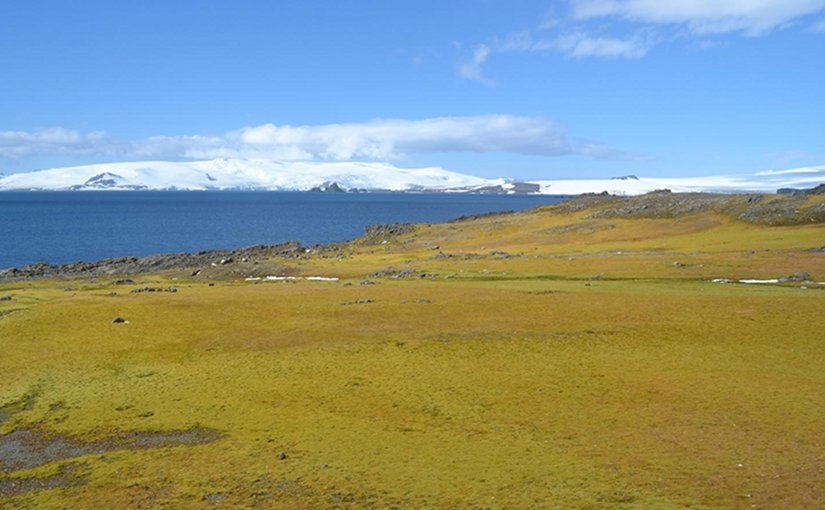 This photograph shows Green Island moss bank with icebergs in background. Credit Matt Amesbury