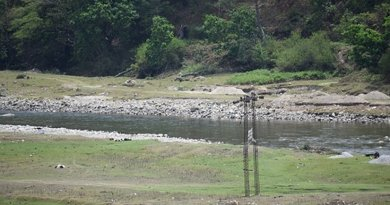 Power lines become death trap for Black necked cranes in Sangti valley. Photo: C K Duarah