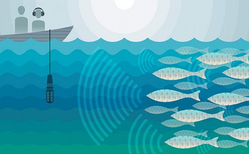 A team led by marine scientists from The University of Texas Marine Science Institute and the Scripps Institution of Oceanography have discovered a way to use the incredibly loud, distinctive sounds that fish make when they gather to spawn--not to catch them but to protect them. The team developed an inexpensive yet accurate method for estimating how many fish are in a spawning aggregation, based on their mating calls. Accurate data on when and where fish spawn, as well as how many there are, would help fisheries managers design effective management practices and monitor the ongoing health of a fishery. Credit Jenna Luecke/Univ. of Texas at Austin