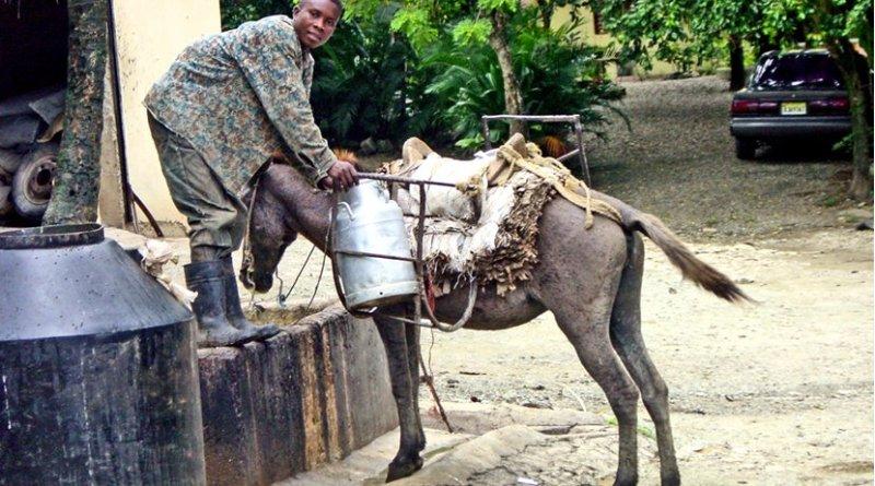 Man getting milk in Dominican Republic.
