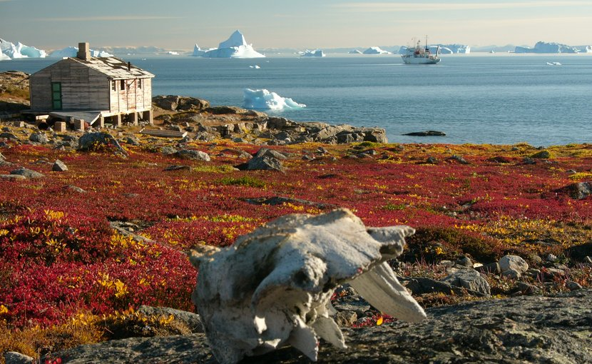 Tundra in Greenland. Photo by Hannes Grobe, AWI, Wikipedia Commons.