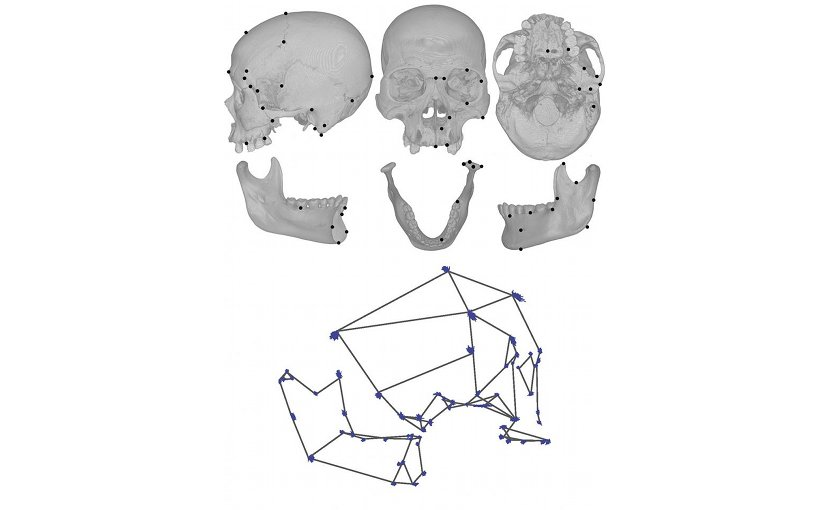 UC Davis anthropologist David Katz measured specific points on hundreds of human skull bones (top) to create a wire frame model of the skull and jaw (bottom). Blue dashes indicate changes in skull shape from foragers to dairy farmers. Credit David Katz and Tim Weaver, UC Davis