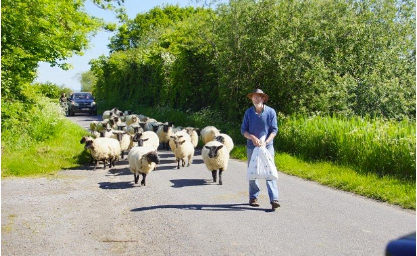 Farmer in Somerset, England.