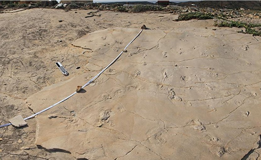 The footprints were discovered by Gerard Gierlinski (1st author of the study) by chance when he was on holiday on Crete in 2002. Gierlinski, a paleontologist at the Polish Geological Institute specialized in footprints, identified the footprints as mammal but did not interpret them further at the time. In 2010 he returned to the site together with Grzegorz Niedzwiedzki (2nd author), a Polish paleontologist now at Uppsala University, to study the footprints in detail. Together they came to the conclusion that the footprints were made by hominins. Credit Andrzej Boczarowski