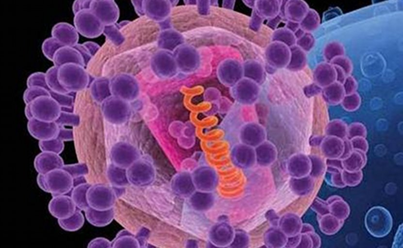 An artist's rendition of HIV (foreground). The knobs (purple) covering the virus are sugar-protein molecules, including gp120, that shield the rest of the virus (pink). Credit National Cancer Institute