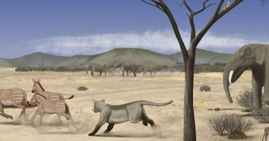 Sub-Desert Savanna Spread Across Madrid 14 Million Years Ago