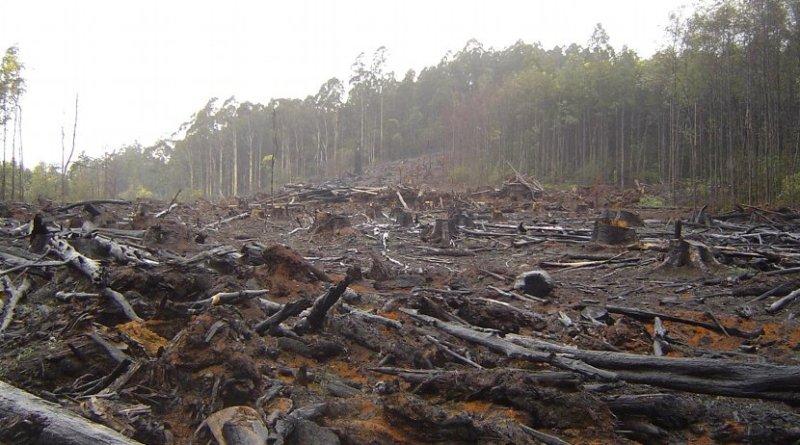 This is deforestation in Australia's Toolangi Park. Credit crustmania / Flickr