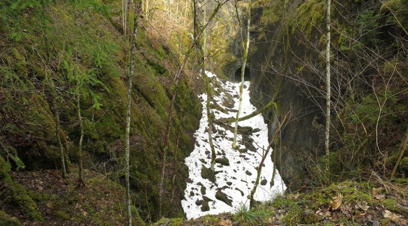 Cold microclimates in forests are for example created by local depressions and dense forest. They are sometimes visible by remaining snow patches in spring. Credit Photo: Caroline Greiser