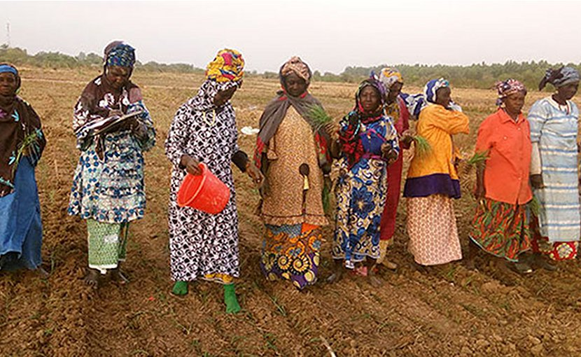 Members of the women's cooperative use climate-resilient organic compost and biopesticides in their farm. Credit: UN Women