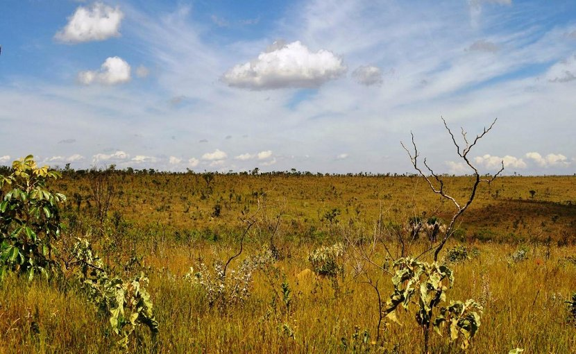 A mix of forest and grassland characteristic of the Brazilian Cerrado. Credit Laurent Hebert-Dufresne