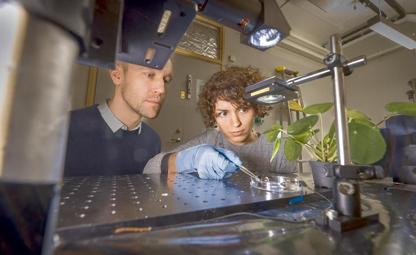 This is Magnus Jonsson and Mina Shiran Chaharsoughi at the Laboratory of Organic Electronics, Linköping University. Credit Thor Balkhed