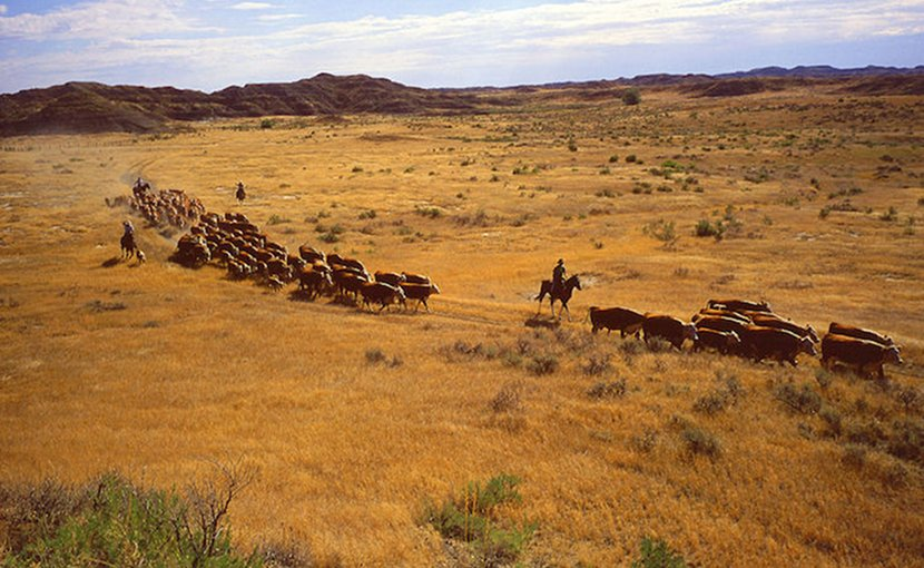 Farmers moving cattle to new pastures. Credit: The United States Department of Agriculture.
