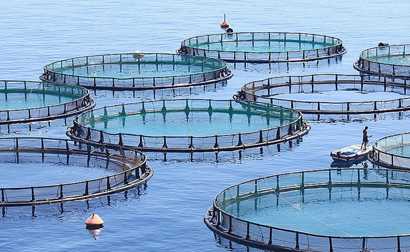 Fish farm. Photo by sc1733, Wikimedia Commons.