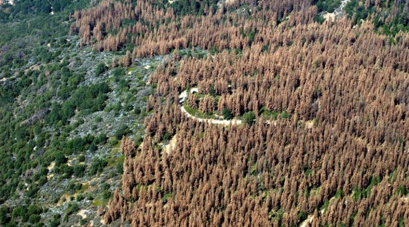 This August 2016 aerial photo of the Sierra Nevada Mountains in central California shows widespread tree loss. The new study shows changes here can affect plant growth across the country. Credit US Forest Service