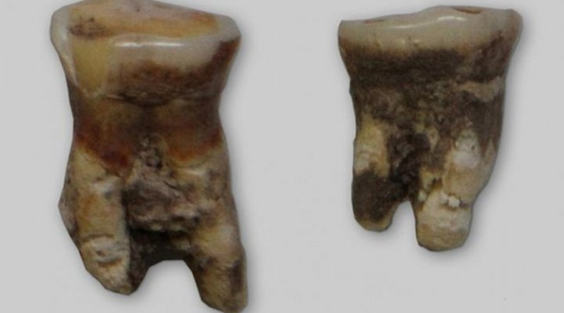 The Mesolithic tooth had evidence of fish scales and fish tissue. Credit Sapienza University of Rome