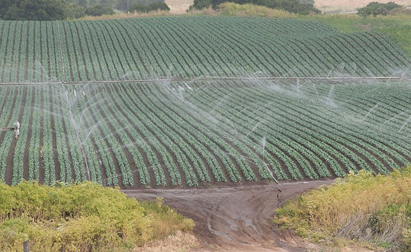 Conventional sprinkler irrigation in the Salinas Valley of California. Photo Credit: USDA.