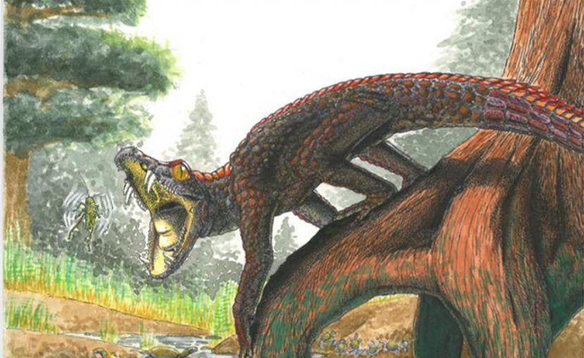 This is a reconstruction of Shartegosuchus. Credit Artist: Viktor Rademacher