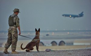 Military working dog team with 380th Expeditionary Security Forces Squadron completes detection training scenario at undisclosed location in Southwest Asia, January 10, 2017 (U.S. Air Force/Tyler Woodward)