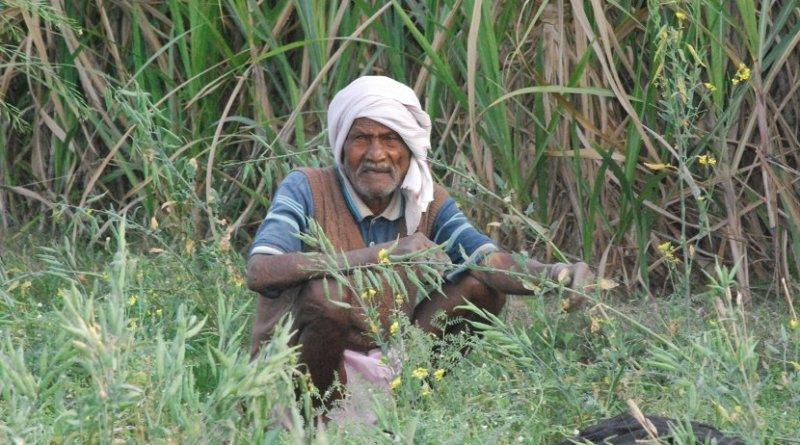 india old man elderly