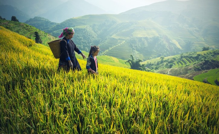 China agriculture farming
