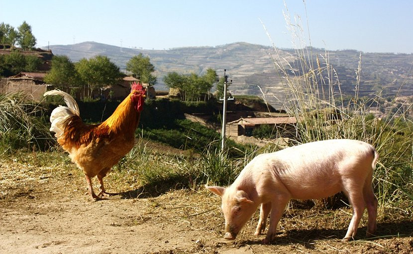 Rural farm in China.