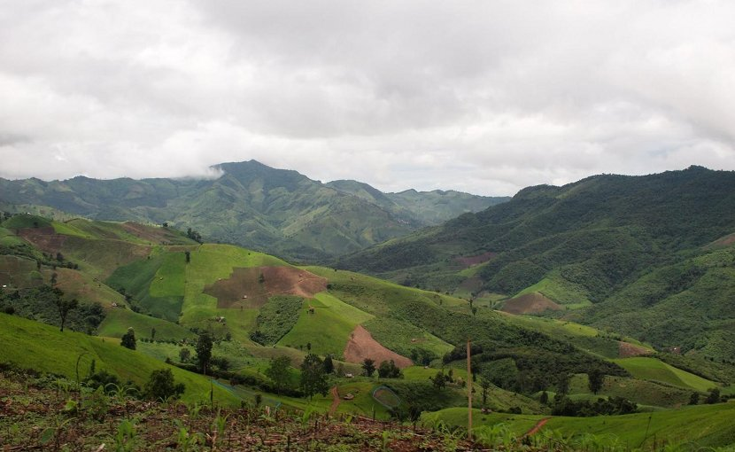 Researchers found greater than expected loss of forests in Southeast Asia. Credit the researchers