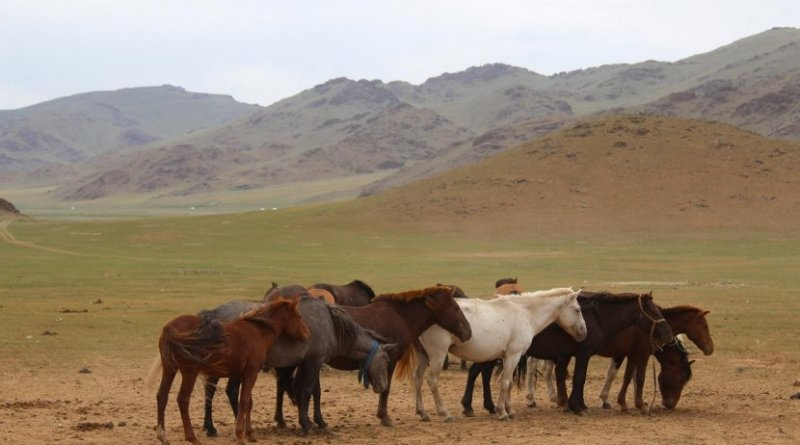 Horses congregate near a deer stone site in Bayankhongor, in central Mongolia's Khangai mountains. Credit William Taylor