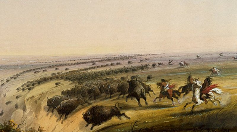Buffalo being chased off a cliff as seen and painted by Alfred Jacob Miller in the late 19th century. Credit: Wikipedia Commons.