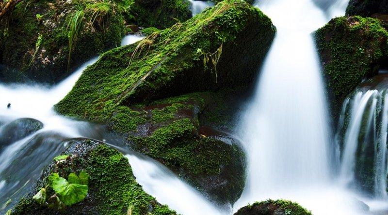 stream creek