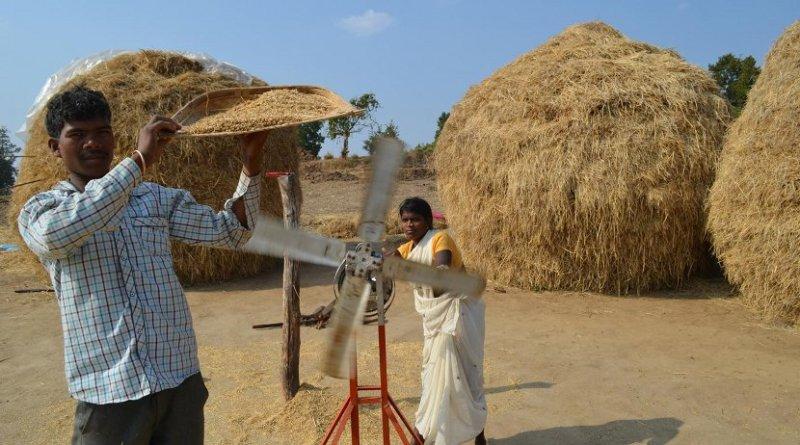 Rice farmers in India. Credit Kevin Krajick