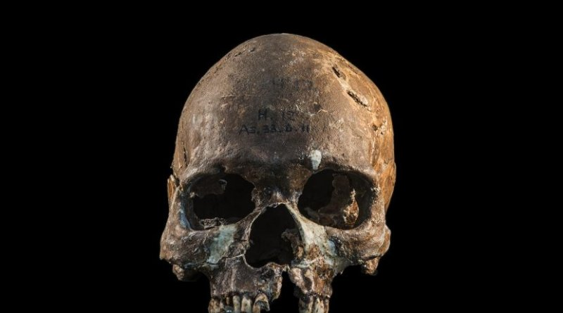 Skull from a Hòabìnhian person from Gua Cha archaeological site, Malaysian Peninsula. Credit Fabio Lahr