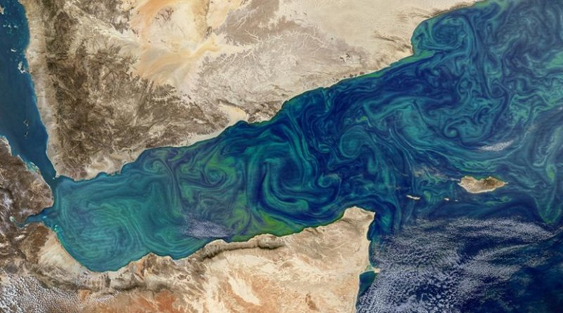Phytoplankton blooms can sometimes be seen from space, as in this image from the Gulf of Aden, shown here in an image taken by the MODIS instrument on NASA's Aqua satellite. Credit NASA's Earth Observatory