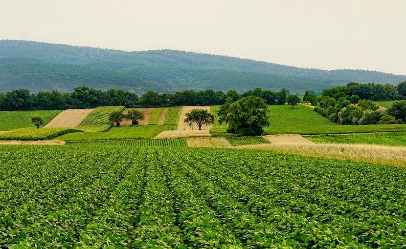 agriculture farm farming