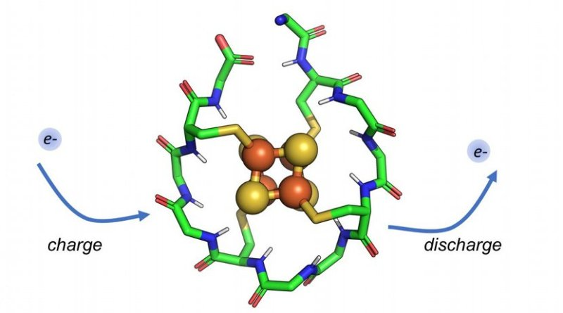 Researchers have designed a synthetic small protein that wraps around a metal core composed of iron and sulfur. This protein can be repeatedly charged and discharged, allowing it to shuttle electrons within a cell. Such peptides may have existed at the dawn of life, moving electrons in early metabolic cycles. Credit Vikas Nanda/Rutgers University-New Brunswick