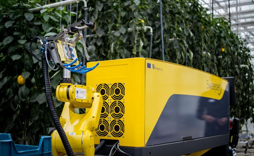 The world's most advanced sweet pepper harvesting robot, developed in a consortium including Ben-Gurion University of the Negev (BGU) researchers, was introduced last week at the Research Station for Vegetable Production at St. Katelijne Waver in Belgium. SWEEPER is designed to operate in a single stem row cropping system, with non-clustered fruits and little leaf occlusion.The Ben Gurion U. team spearheaded efforts to improve the robot's ability to detect ripe produce using computer vision, and has played a role in defining the specifications of the robot's hardware and software interfaces, focusing on supervisory control activities. Credit Research Station for Vegetable Production at St. Katelijne Waver
