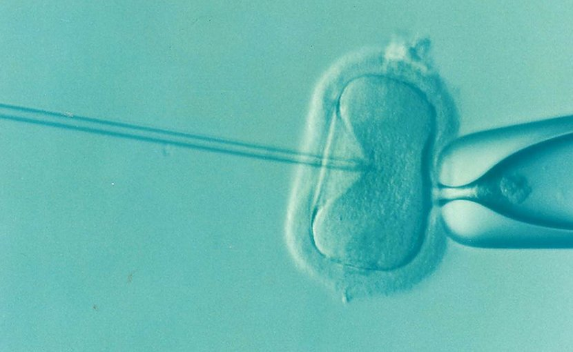 ivf reproduction assisted