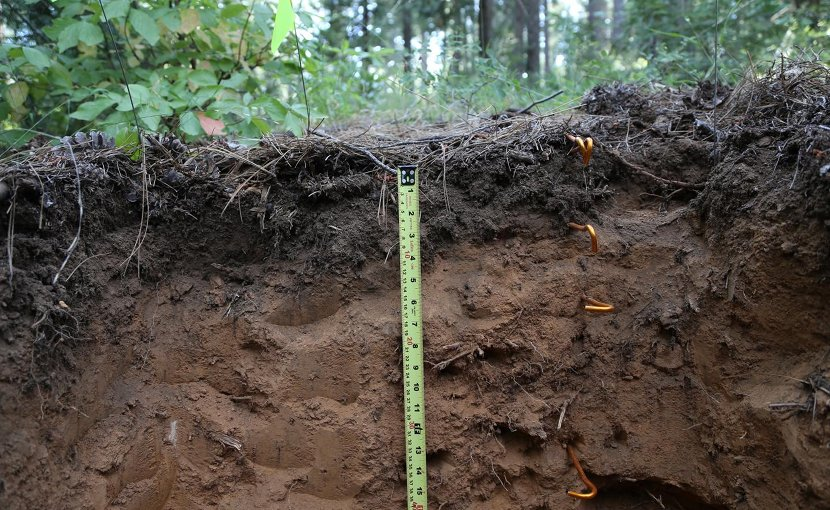 This is cross-section of study site near Georgetown, CA. Over half of the world's soil carbon is stored below 20 degrees cm, making deep soil a large potential emitter of greenhouse gas carbon dioxide. Credit J. Bryan Curtis